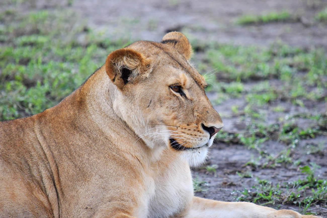 andBeyond Serengeti Under Canvas - Tanzania - acampamento de luxo - safari glamping