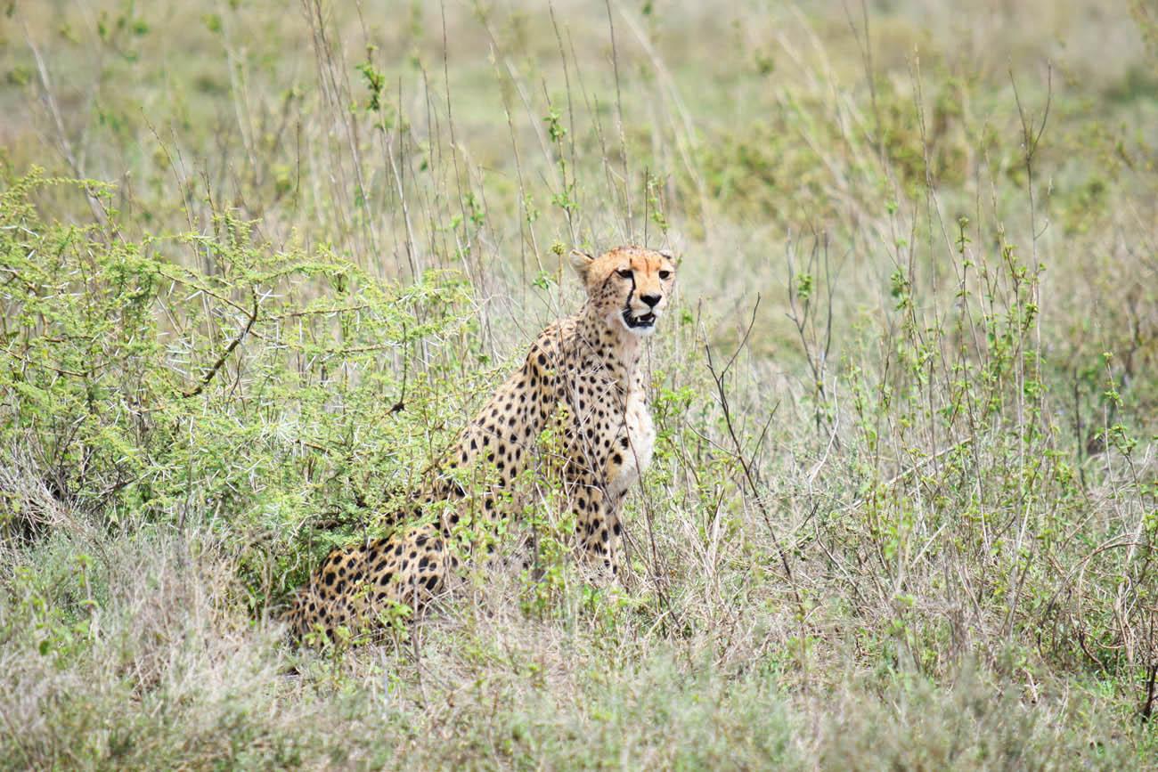 Safari Serengeti Tanzania - andBeyond