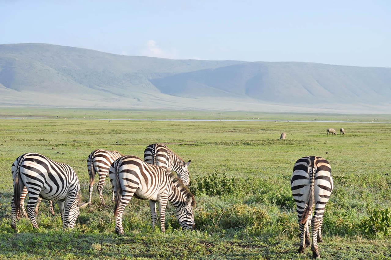 Ngorongoro Crater Lodge andBeyond Tanzania - Safari na Cratera de Ngorongoro