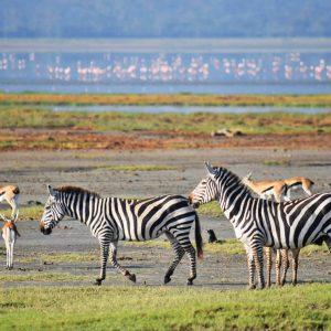 cratera de ngorongoro tanzania
