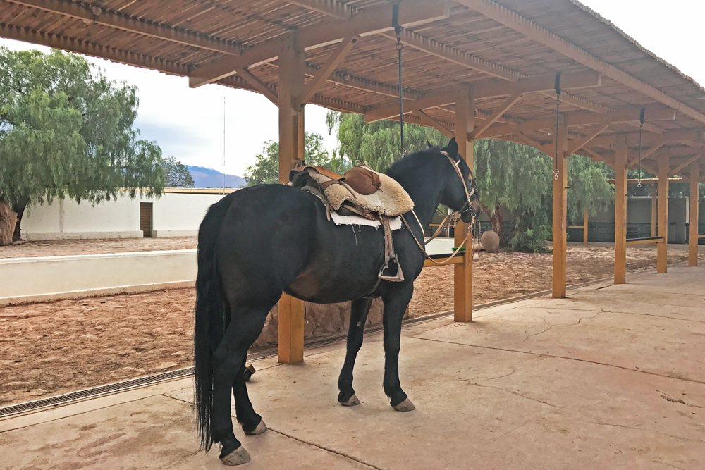 explora atacama hotel chile cavalos