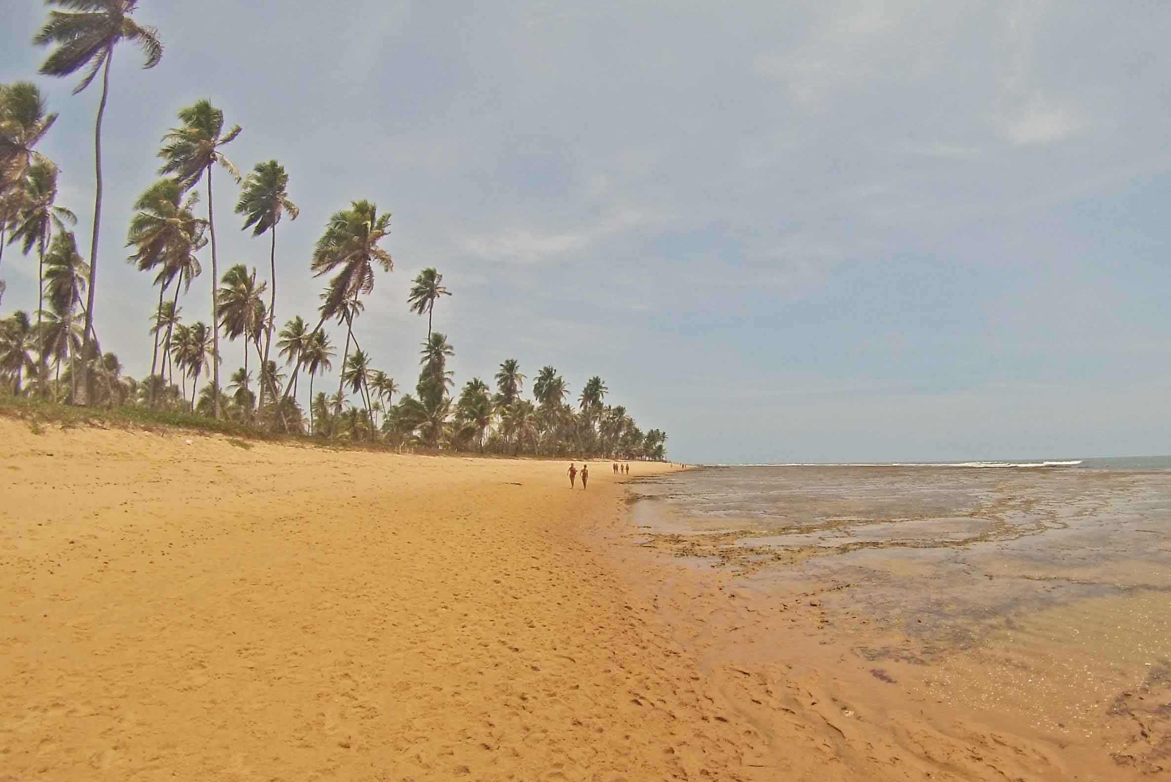 praia do forte piscinas naturais