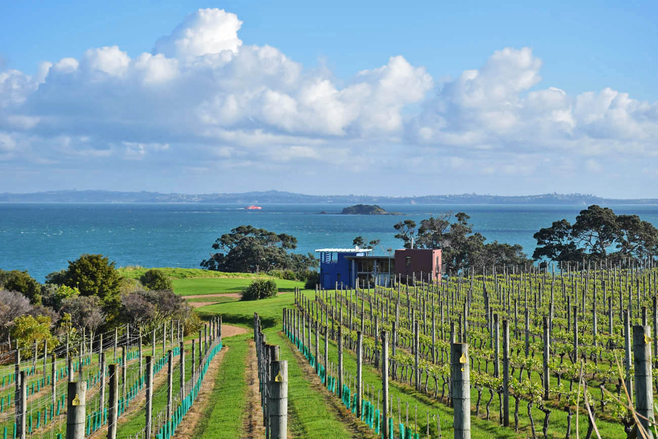 cable bay winery waiheke island new zealand