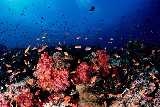 Mergulho com cilindro em Fiji