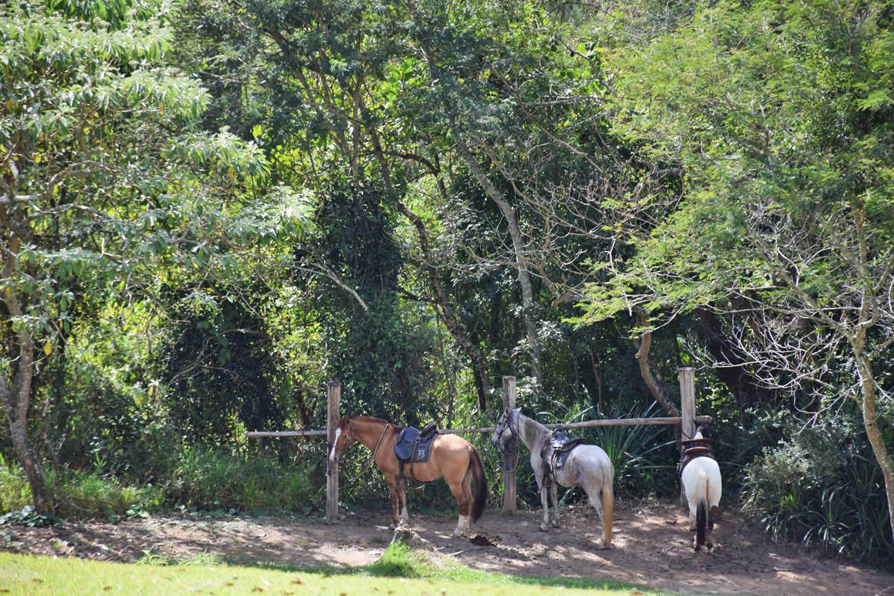botanique hotel campos do jordão cavalos