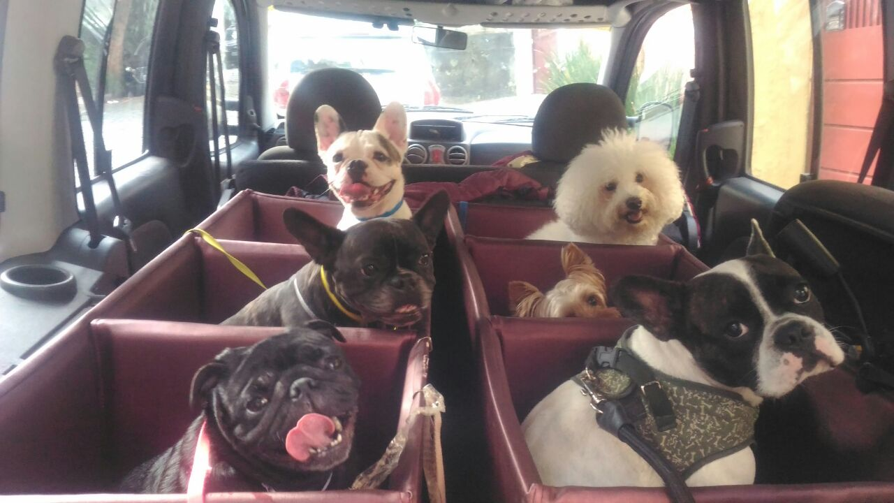 clubinho do pet transporte de cachorro