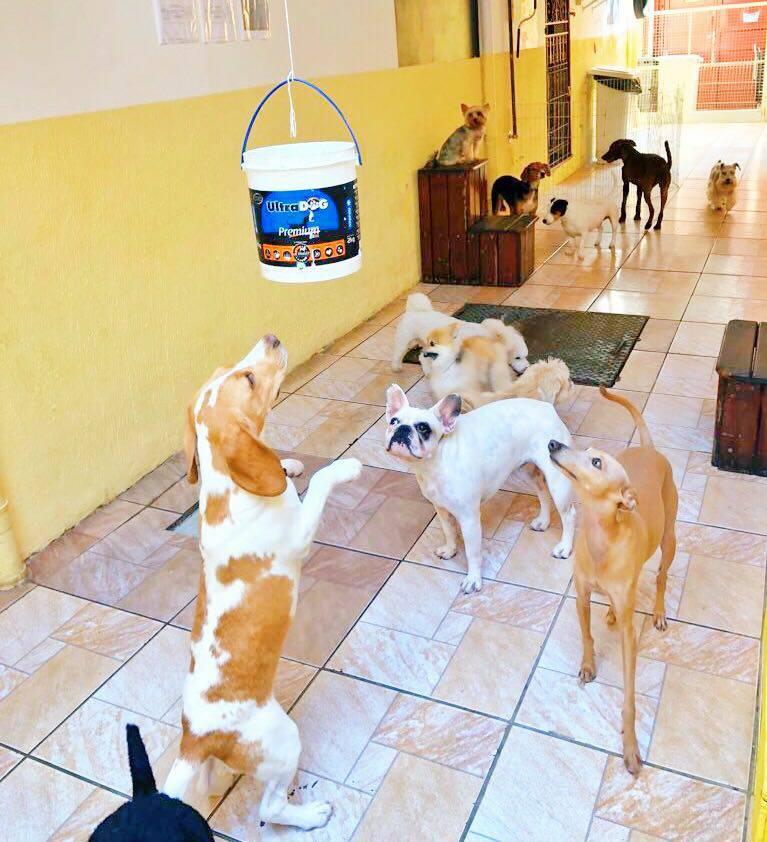 hotel para cachorro em são paulo - clubinho do pet