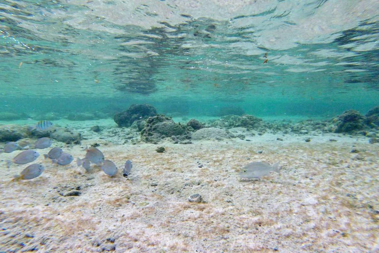 piscina do atalaia noronha - trilha do atalaia - praia