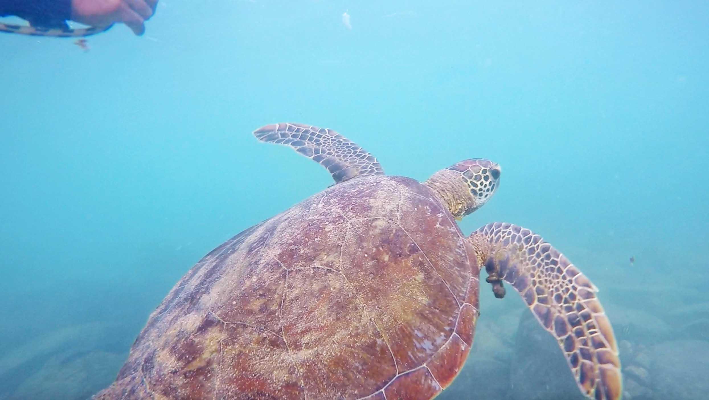 tartaruga snorkel praia do sueste