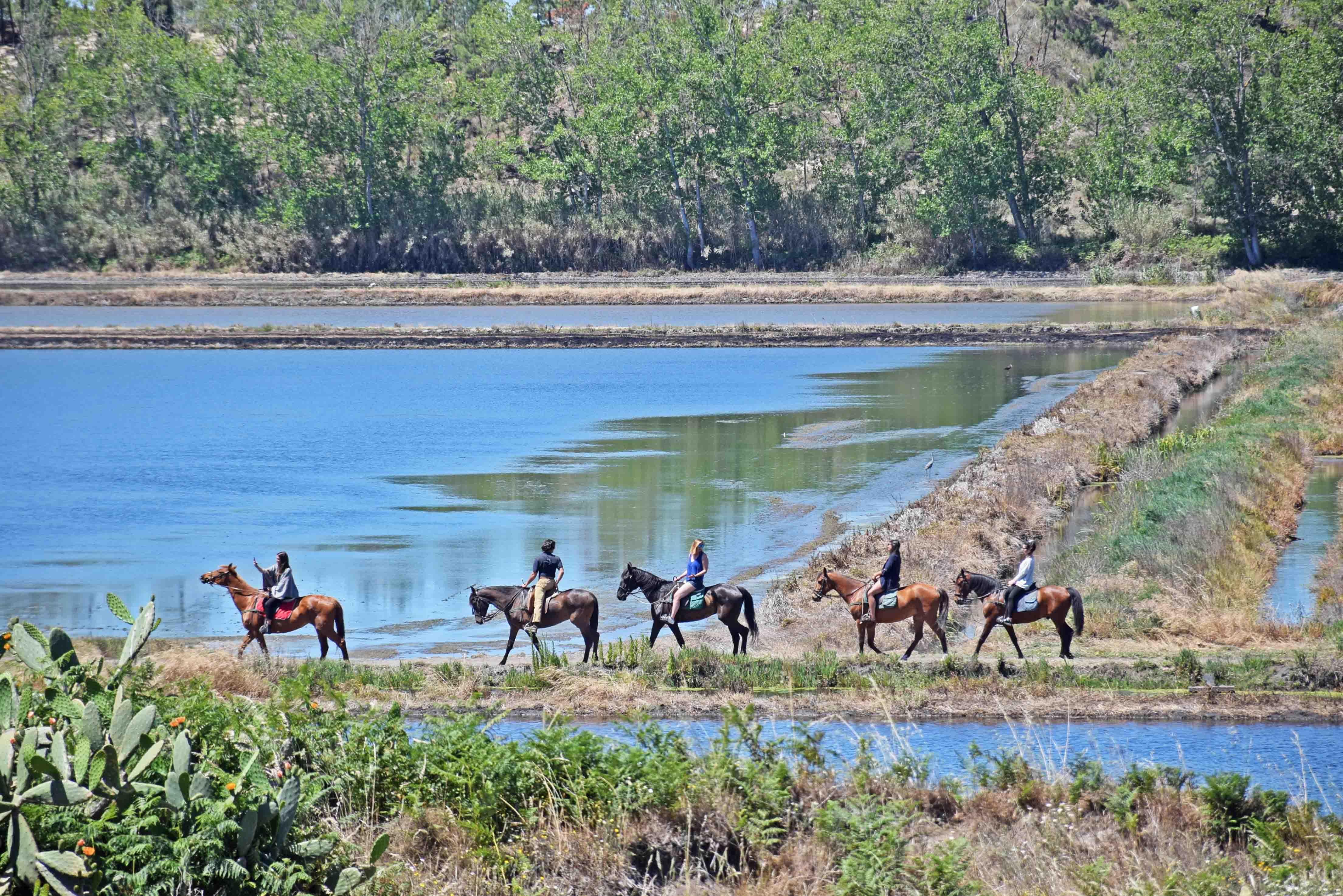 Cavalos na Areia - Comporta - Portugal