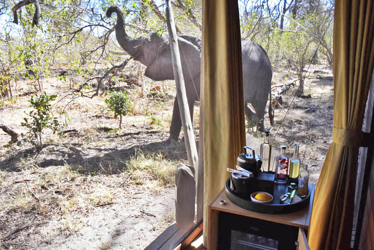 Okavango Delta Botsuana - andbeyond Xaranna Camp - luxury Lodges and Hotels Botswana