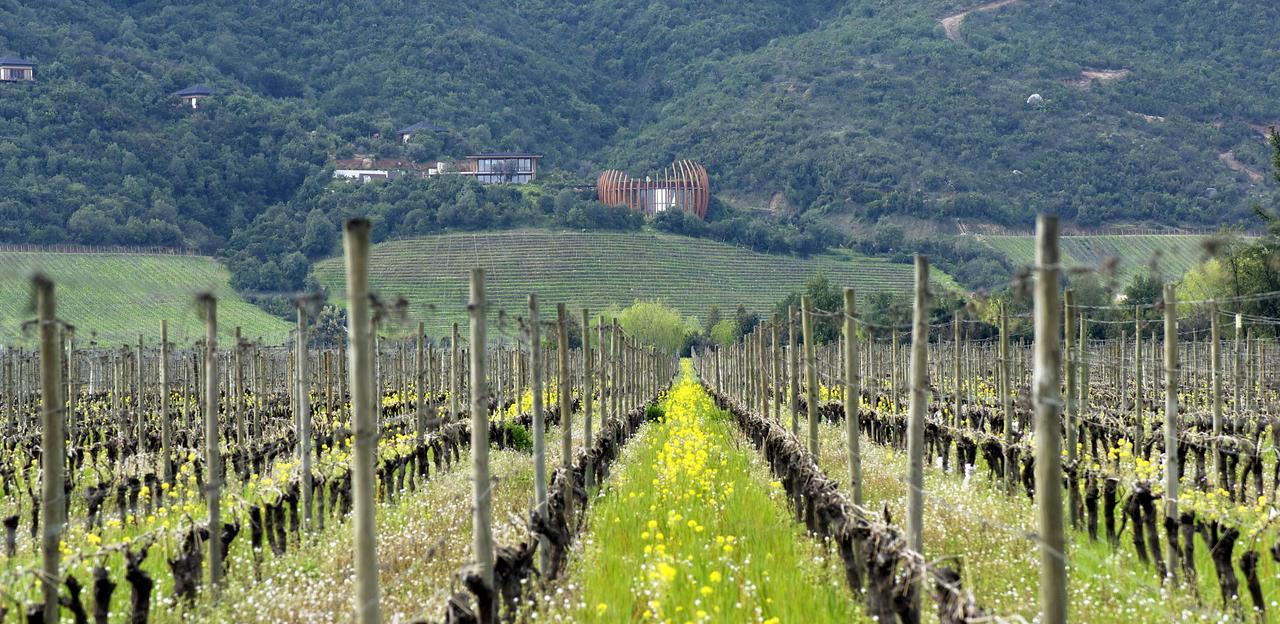Lapostolle Clos Apalta vinícola Vale do Colchagua - Chile