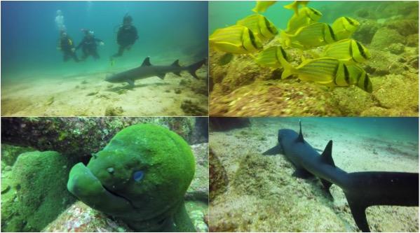 mergulho cilindro isla coiba panama