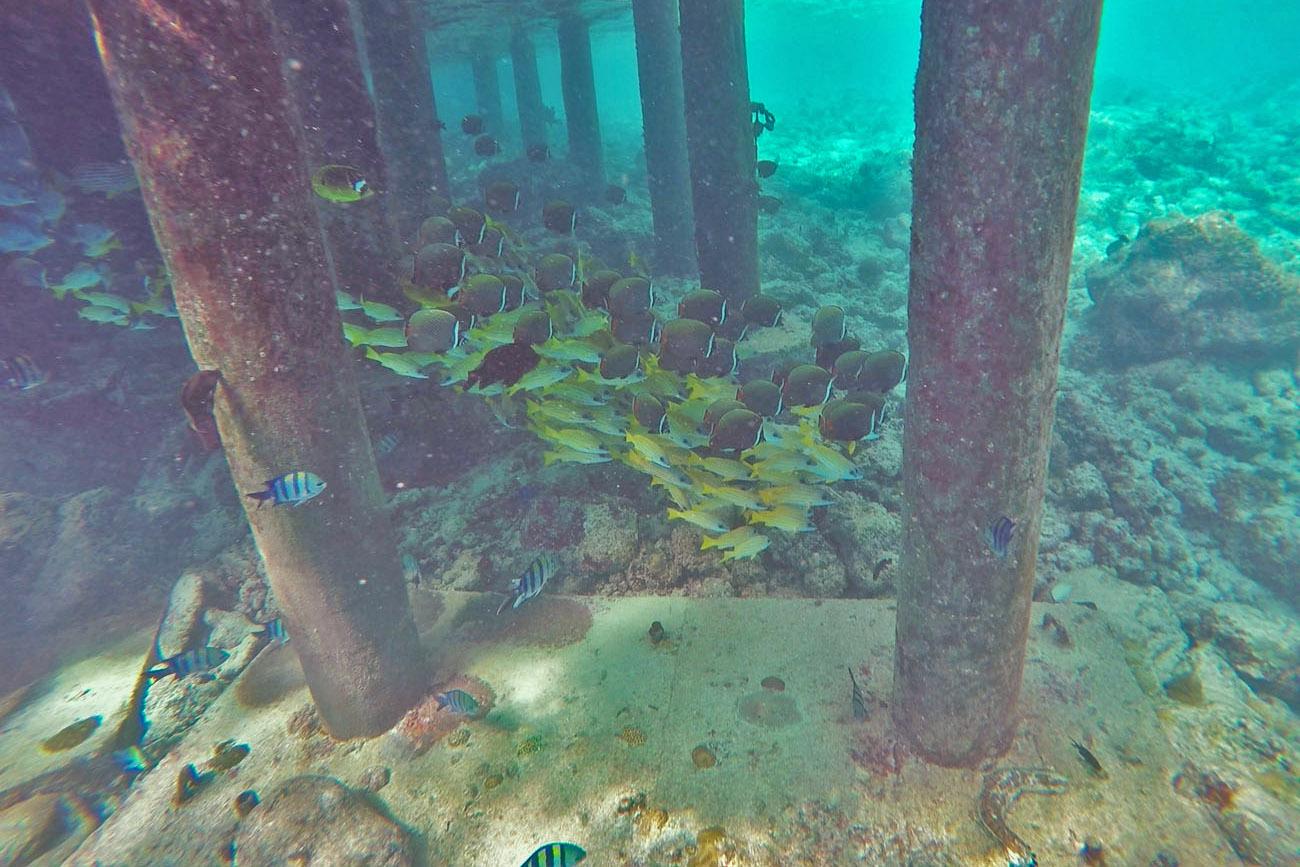 Soneva Fushi Maldives - Bar a Bara - best snorkel