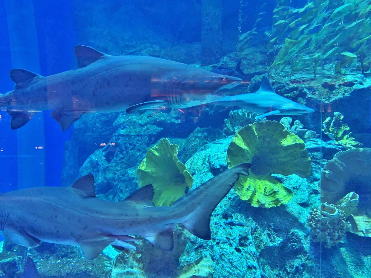 Dubai Aquarium - Dubai Mall