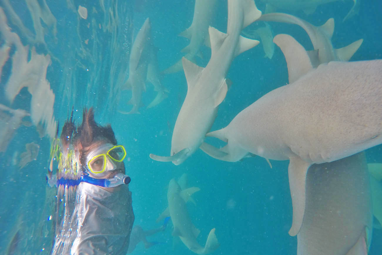 Anantara Dhigu Activities - snorkel nurse sharks Maldives