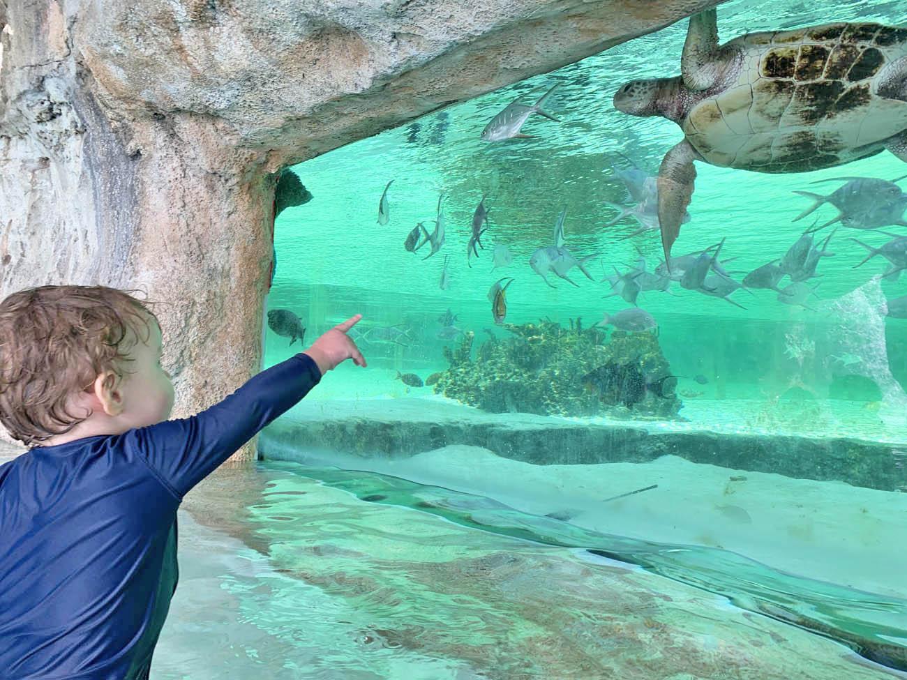 Baha Mar - Nassau - Bahamas - where to stay - pools